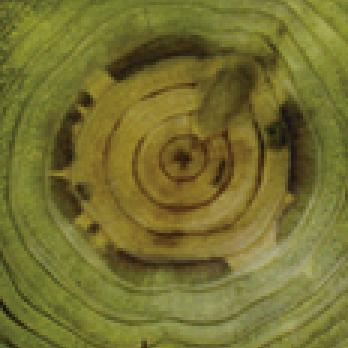 加圧注入処理木材の断面