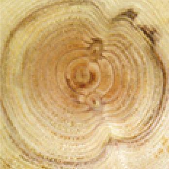 塗布処理木材の断面